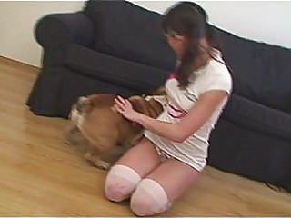 Pompously Little Caprice with English bulldog